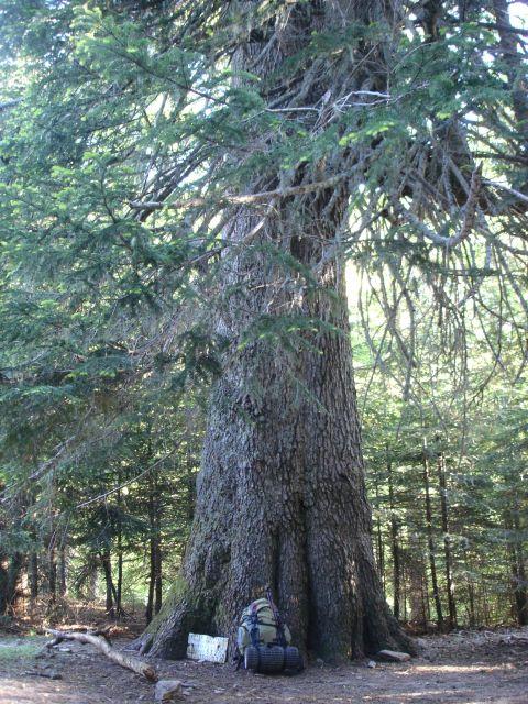 quels arbres !